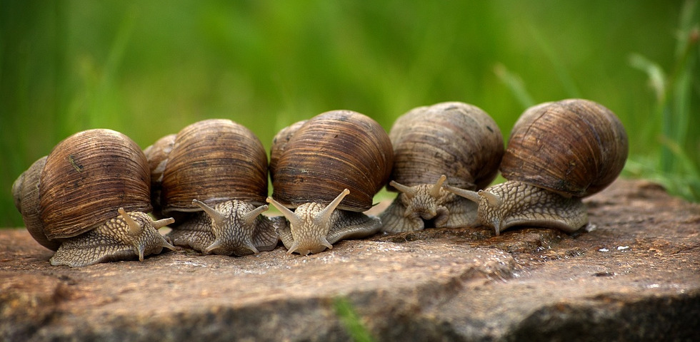 Five snails lined up in a row