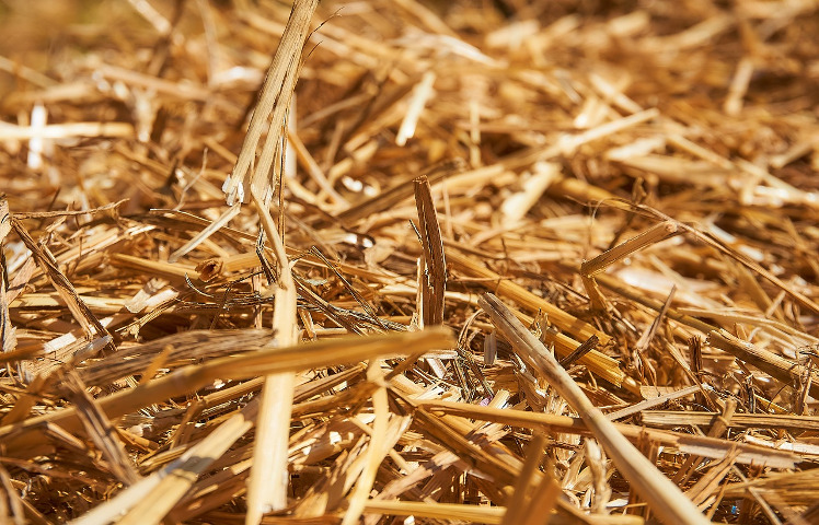 A mess of straw